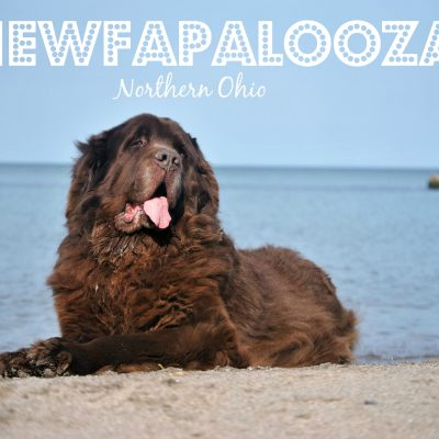 Northern Ohio Newfapalooza 2018