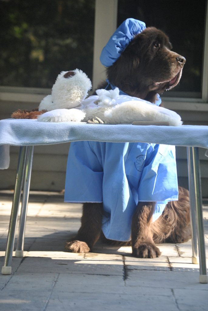 dog dressed as surgeon