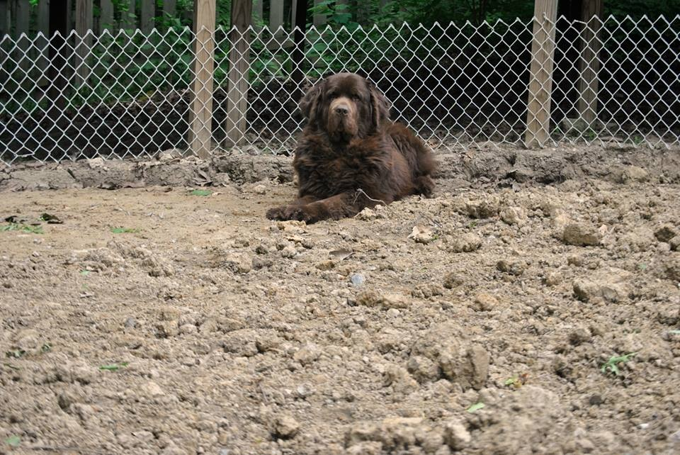 brown dog sitting in dirt