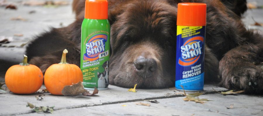5 Ways Newfie Owners Get Ready For The Fall Mud