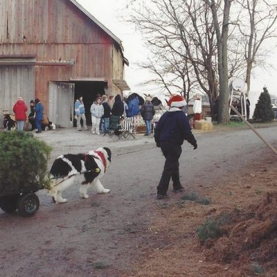 2018 Newfoundland Dog Christmas Tree Pull List