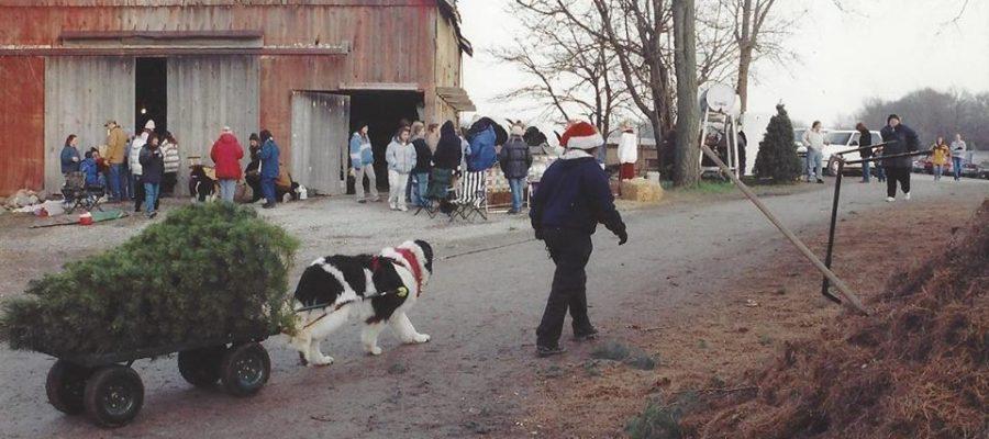 2018 Newfoundland Dog Christmas Tree Pull List