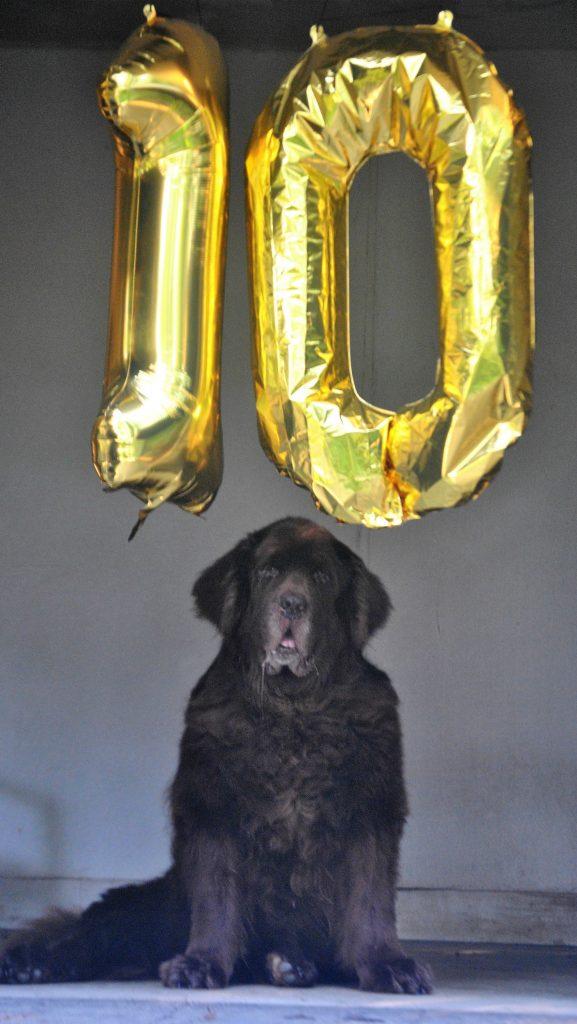 Leroy turns 10
