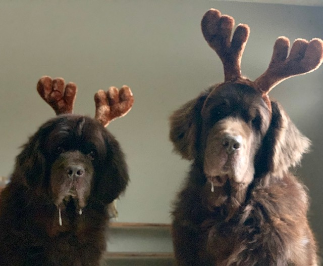 Newfie's 12 Days Of Christmas
