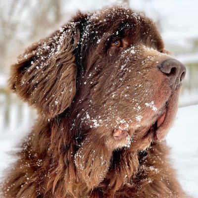 The Newfie's Snowmageddon 2019