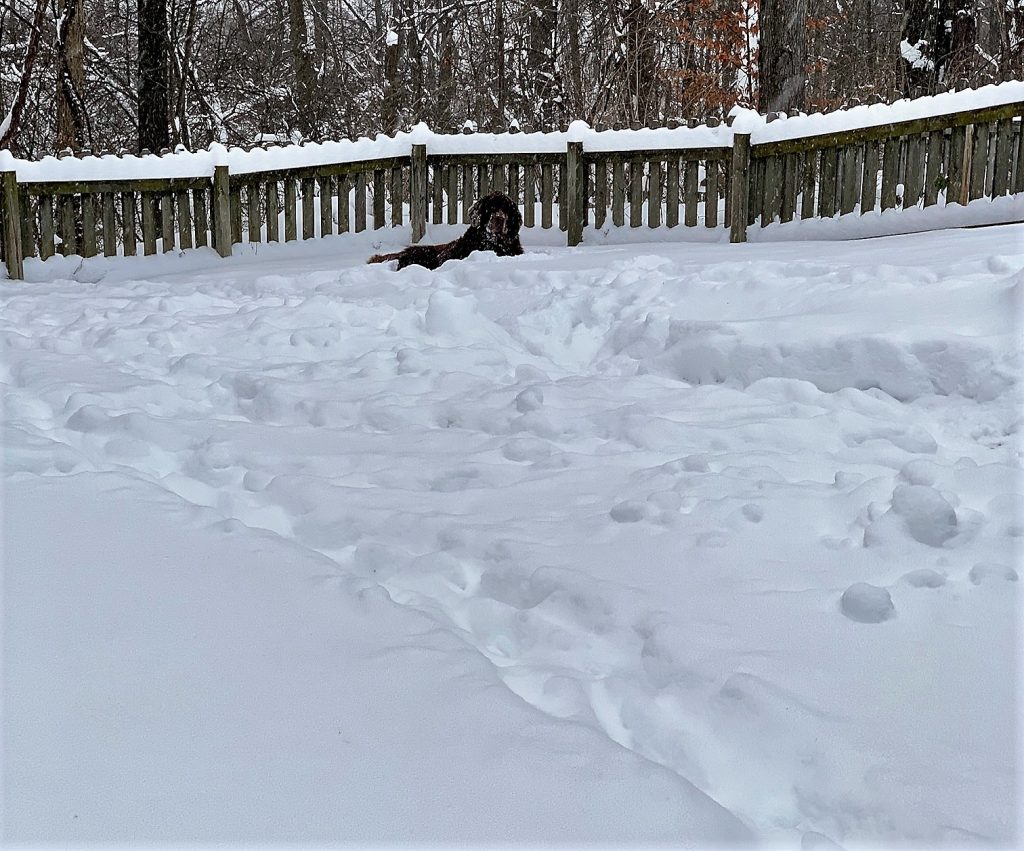 newfie in bed of snow