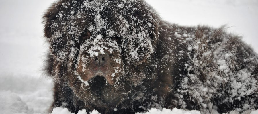 4 Ways To Combat Snowballs On Dog Paws