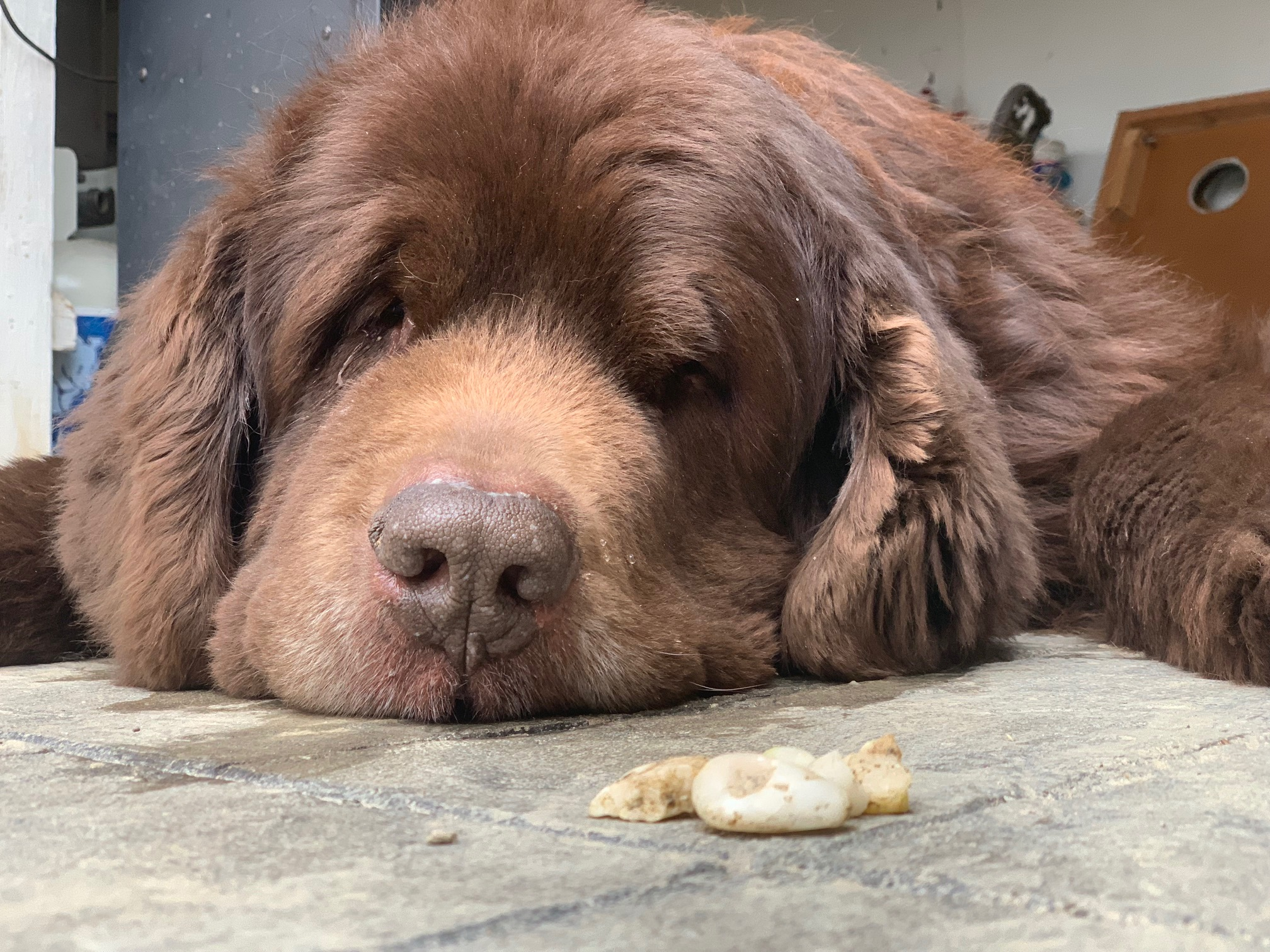 how to stop a dog from eating rocks