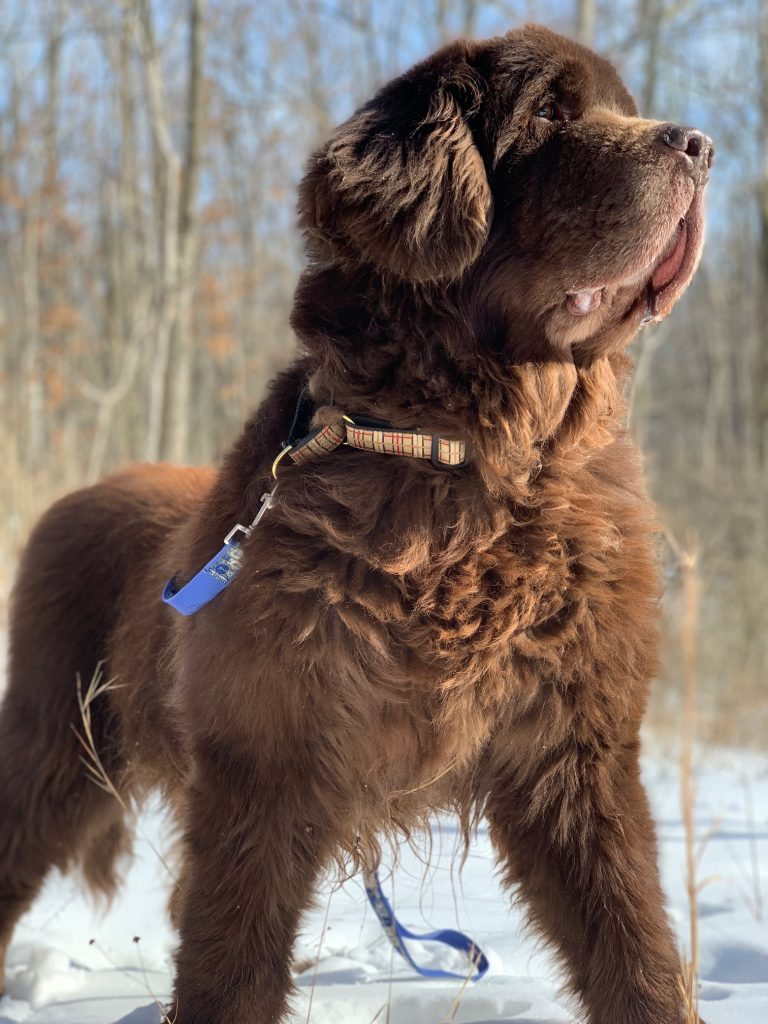 8 Stimulating Activities To Do With Your Dog In Winter