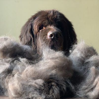 """What Does """"Blow Coat"""" Mean?"""