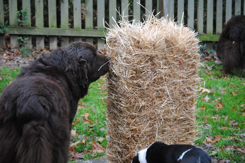 Simple Solutions To Reduce Dog Mud In Your Yard My Brown Newfies