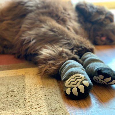 Do Non-Slip Dog Socks Really Work?