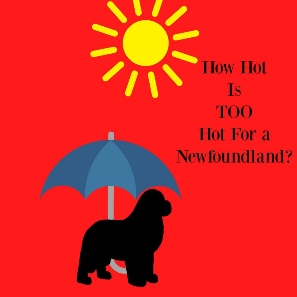 how hot is too hot for a newfoundland dog