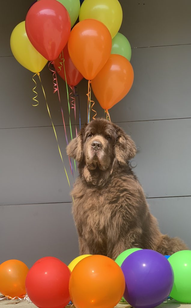 newfie with balloons