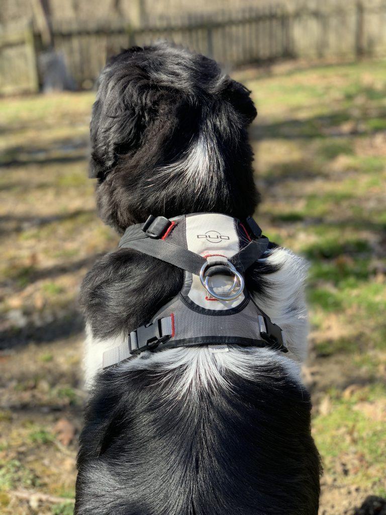 duo adapt dog harness
