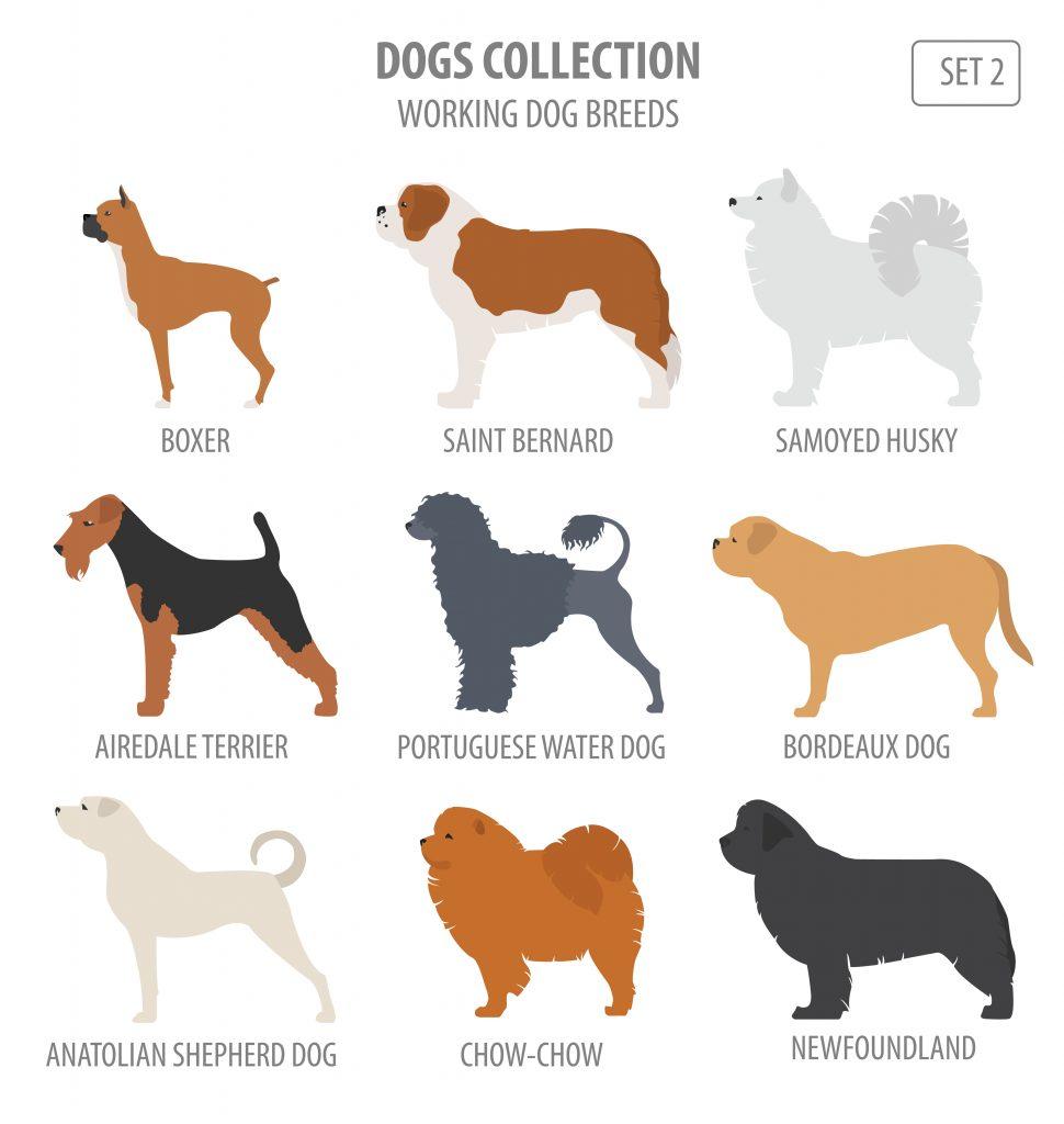 working breed dog chart
