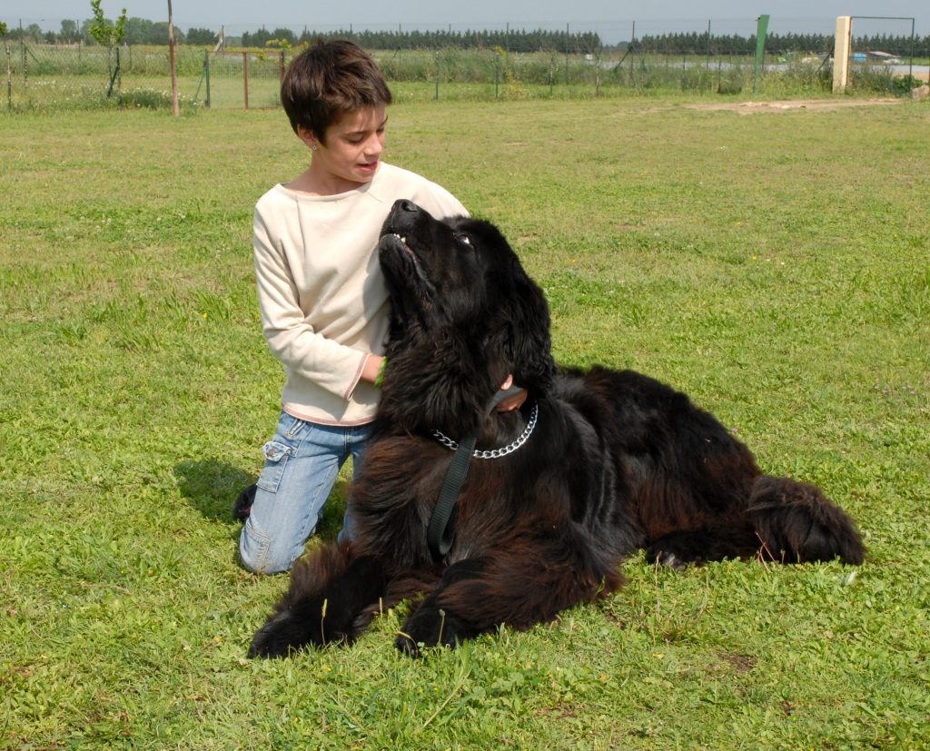 newfoundland dog with child