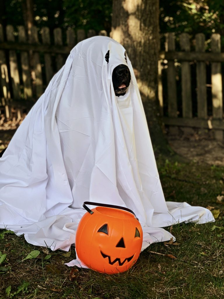 newfoundland dog dressed as ghost with pumpkin