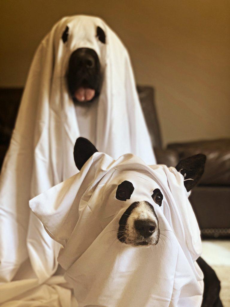 Newfoundland and Corgi dressed as ghosts