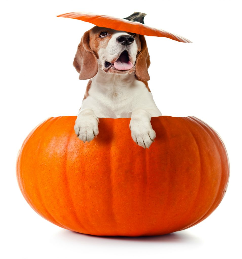 how much pumpkin for a dog