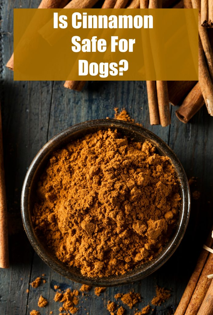 is cinnamon safe for dogs to have