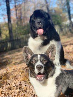 Odin & Finn
