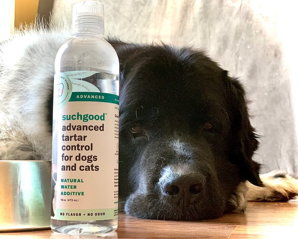 A Natural Solution For My Dog's Stinky Breath
