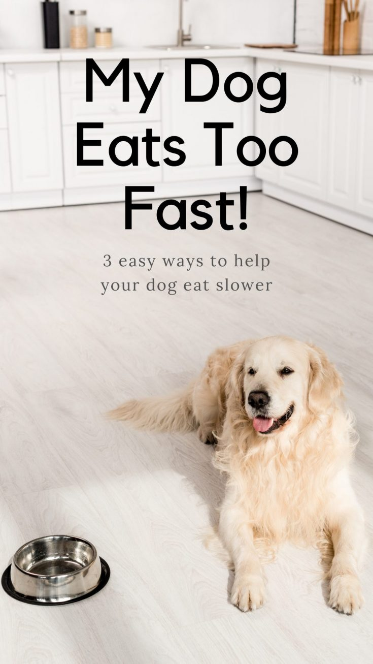 if your dog eats too fast you can help to slow them down by buying a slow feeder bowl or making your own