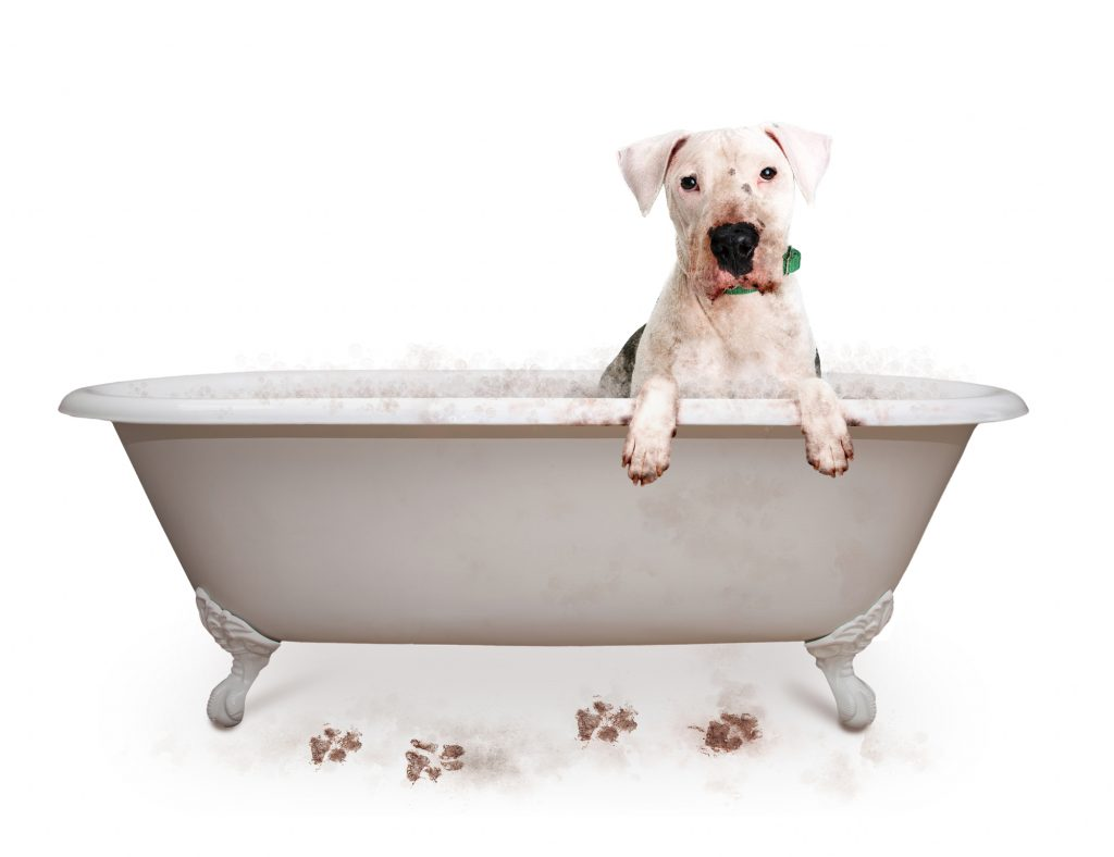 muddy dog getting a bath
