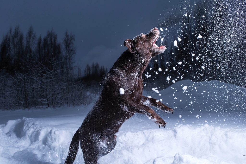 dog catching snowball in the air