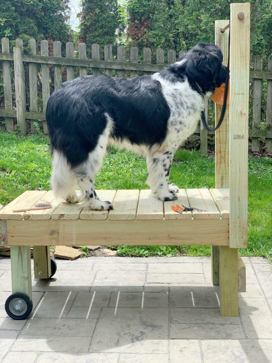 tips on getting your large dog on a grooming table