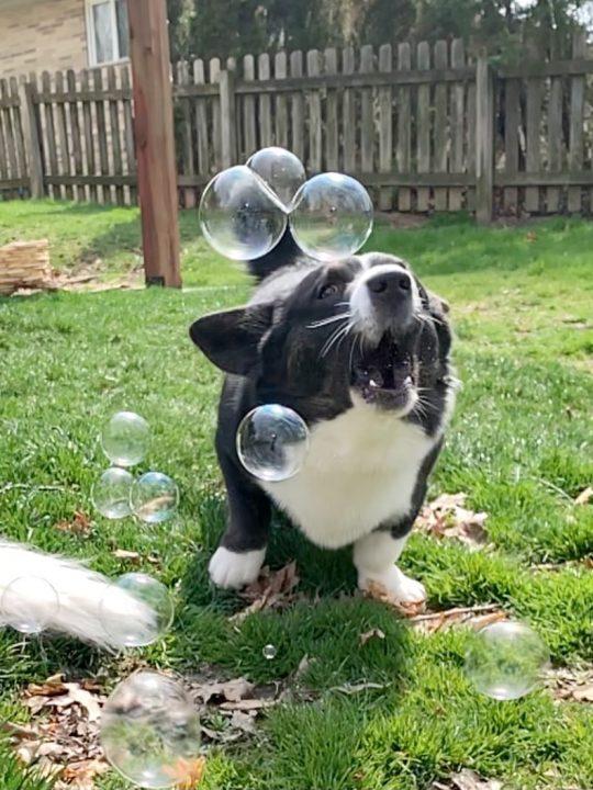 dog bubble for canine enrichment